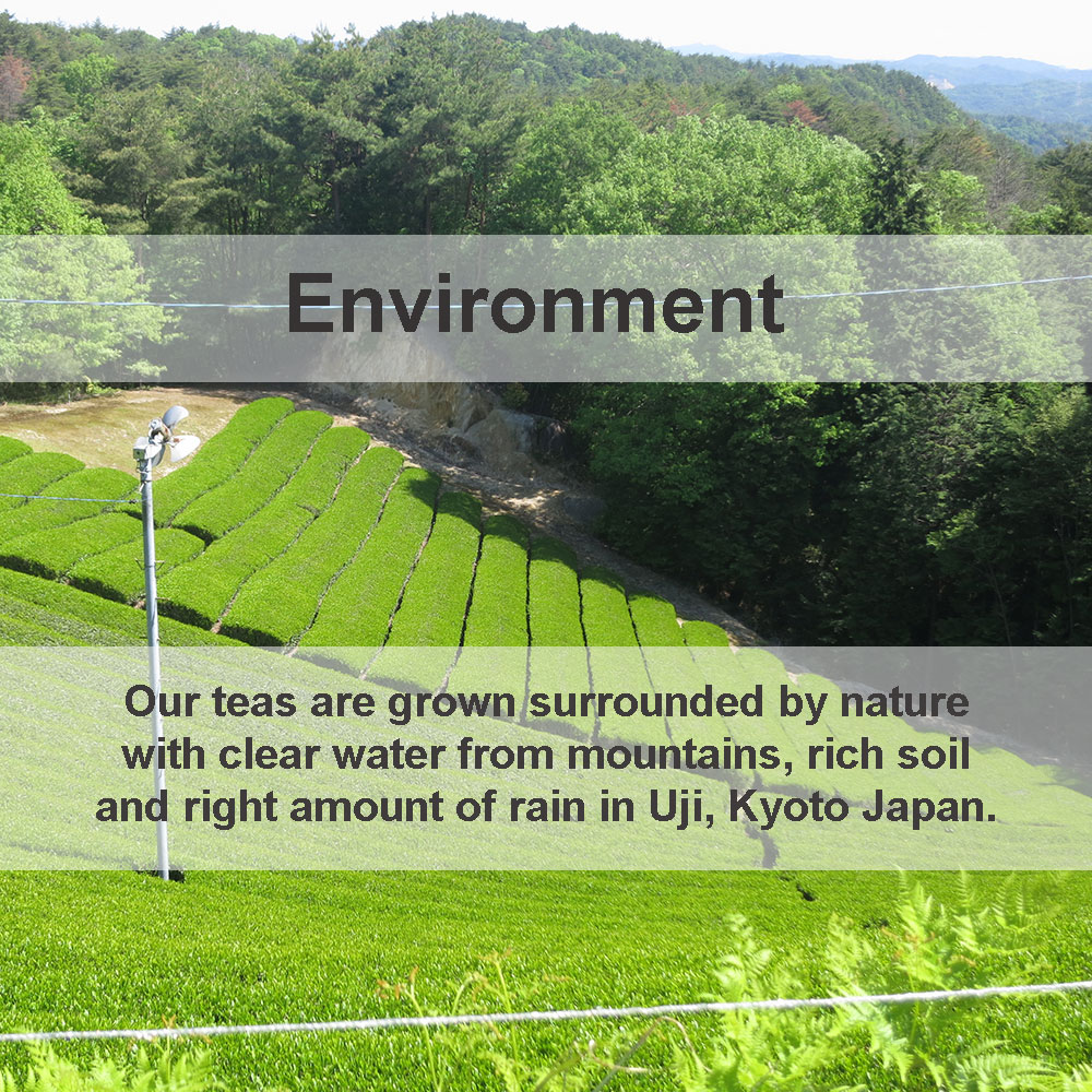 surrounding-environment-of-our-tea